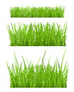 Set of green grass Royalty Free Stock Photos