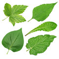 Set of green leaves Royalty Free Stock Photography