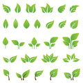 Set of green leaves design elements this image is an illustration Royalty Free Stock Photography