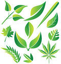 Set of green stylized leafs illustration design Stock Photography