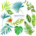 Set of green tropical watercolor leaves and plants.