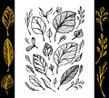 Set of hand draw structure of leaves black on white in line art