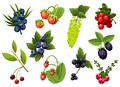 Set of hand drawn branchs currant, grapes, blueberry, strawberry, cherry, bramble, cranberry, berries with leaves. Fresh