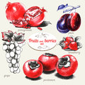 Set of hand drawn fruits and berries