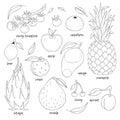 Set of hand drawn fruits.