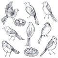 Set of hand drawn ink sketch birds, nest, chicks
