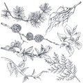 Set of hand drawn ink sketch spring branches