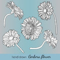 Set of hand drawn vector gerbera flowers. Can use Royalty Free Stock Photo