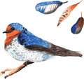 A set of hand drawn watercolor containing bird hirundo neoxena a and feathers Stock Photos