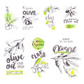 Set of hand drawn watercolor labels and signs of olive oil Royalty Free Stock Photo