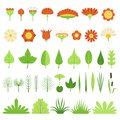 Set of herbs, bushes, flowers, leaves and reeds. Vector illustration. Botanical collection