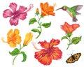 Set of hibiscus flower.