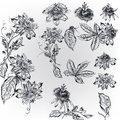 Set with high realistic vector hand drawn flowers in vintage eng