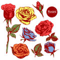 Set of highly detailed colorful hand-drawn roses. Royalty Free Stock Photo