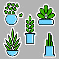 Set of house plants in pots