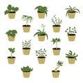 Set of houseplants