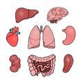 Set of human internal organs, vector illustrations