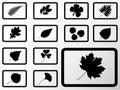 Set Icons - 12B. Leaves