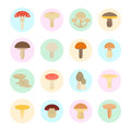 Set Vector Illustration of Mushrooms Royalty Free Stock Photo