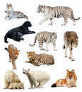 Set of images of carnivores Royalty Free Stock Photo
