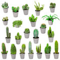 Set of indoor plants in pots - cactuses isolated on white Royalty Free Stock Photo