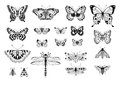 Set of insects black white vector butterflies bees dragonflies and flies Stock Images