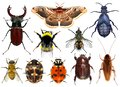 Set of insects Royalty Free Stock Photo