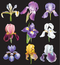 Set of iris flowers on black background Royalty Free Stock Photos