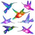 Set of isolated humming birds vector flying in green violet orange pink and blue colors Stock Photography