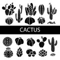 Set of isolated silhouette cactus and succulents. Vector illustr