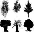Set isolated trees - 13 Royalty Free Stock Images
