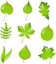 Set of isolated vector leaves. Royalty Free Stock Images