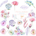 Set with isolated watercolor floral bouquets and elements: tender flowers and leaves in pastel shades
