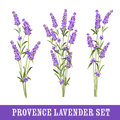 Set of lavender