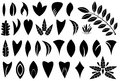 Set leaf shapes illustrated white background Royalty Free Stock Image