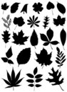 Set of leaf vector Royalty Free Stock Photos