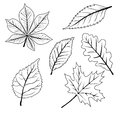 Set of leafs Royalty Free Stock Photo