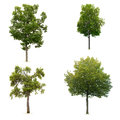 Set of leafy green tree Stock Photos
