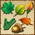 Set of leaves from different trees six icons vector Royalty Free Stock Image