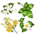 Set of leaves, flowers, branches of apple. Beautiful herbal and floral herbarium