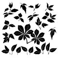 Set leaves plants trees black silhouettes white background Royalty Free Stock Photos