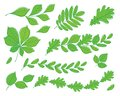 Set of leaves of various trees. Isolated green leaves on a white background.