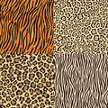 Set of leopard, cheetah, tiger and zebra skins. Royalty Free Stock Photography