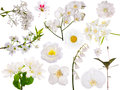 Set of light flowers isolated on white background Royalty Free Stock Images