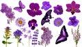 Set Of Lilac Color Butterflies...