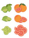 Set of lime and grapefruit slices Royalty Free Stock Photo