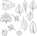Set of linear drawing leaves Royalty Free Stock Photos