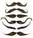 set long curly beard and mustache different colors.beauty style .realistic 3d .