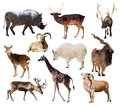 Set of mammal animals over white