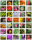 Set of many colorful blooming flowers different garden and wild from all over the world Stock Photos